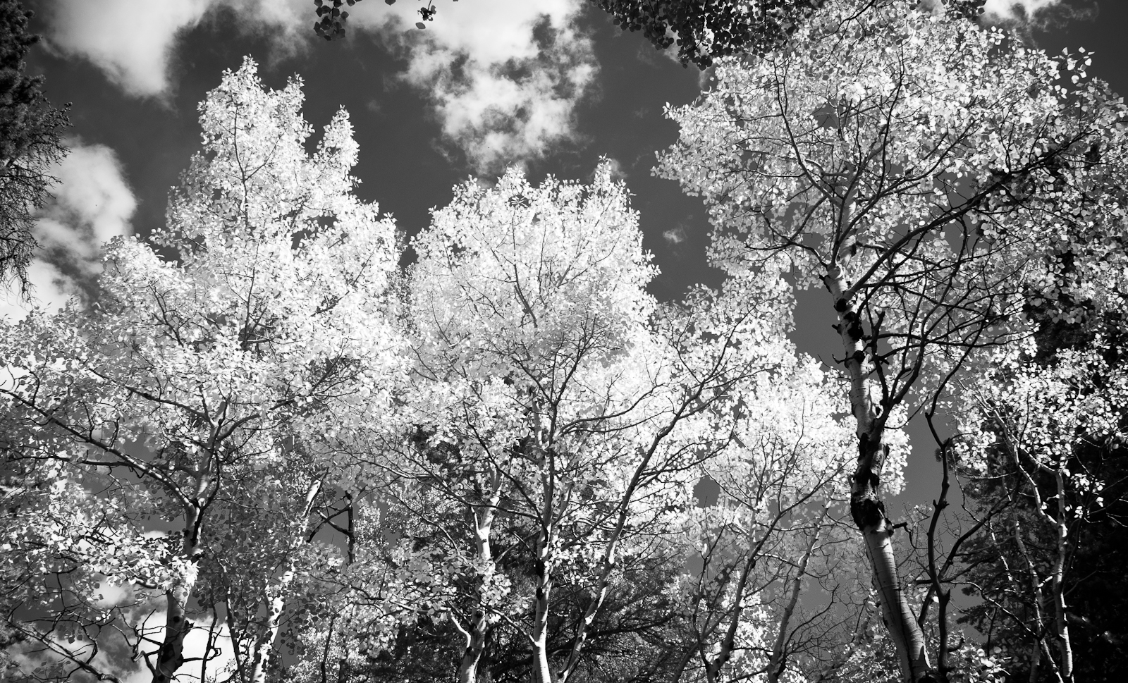 BWTrees